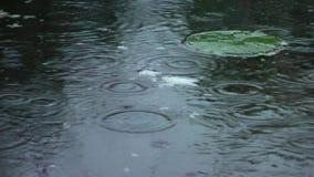 Regendruppels op de oppervlakte van het water in de vijver stock footage