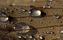 Regendruppels op een bruin blad Stock Foto's