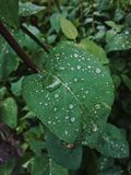 Regendruppels op een groen blad royalty-vrije stock afbeelding