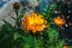 Regendruppels op glas met een weerspiegeling van kleuren royalty-vrije stock afbeelding