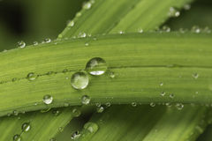 Regendruppeltjes Stock Foto's