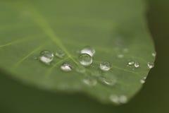 Regendruppeltjes Stock Foto