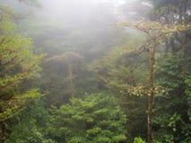 Regenend bos Stock Fotografie