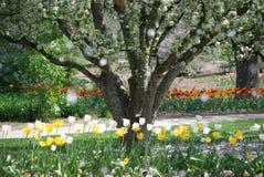 Regenende bloemblaadjes van bloeiende bomen in de lente bij Lilacia-Park in Lombard, Illinois Stock Foto