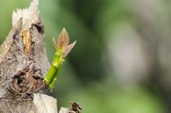 Regeneração da árvore Fotos de Stock Royalty Free