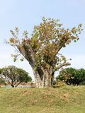 Regeneración de un árbol cortado fotos de archivo libres de regalías