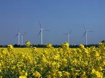 Regeneratieve energiebronnen, koolzaad en wind Stock Foto's
