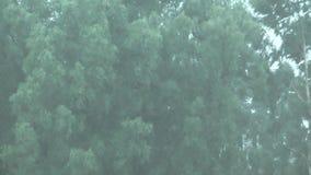 Regenguß. stock video
