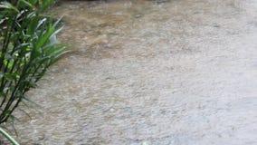 Regenjahreszeit stock video footage