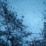 Regenperlen unter Bäumen Lizenzfreies Stockfoto