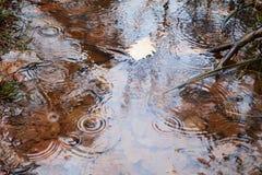 Regenpfütze im Wald stockbilder
