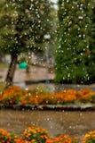 Regenrückgänge fallen ununterbrochen mit Unschärfegrün-Naturhintergrund stockfoto