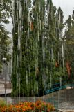 Regenrückgänge fallen ununterbrochen mit Unschärfegrün-Naturhintergrund lizenzfreie stockfotografie