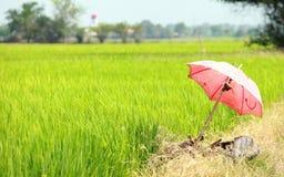 Regenschirm auf dem Reisfeld Stockbilder
