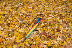 Regenschirm auf gefallenen Blättern Lizenzfreie Stockfotografie