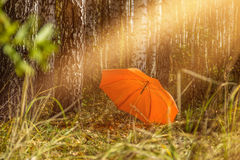 Regenschirm im Herbstwald Stockfotos