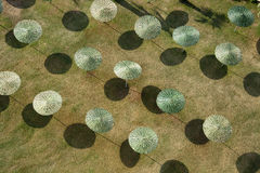 Regenschirme in der Sonne Lizenzfreie Stockbilder