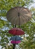 Regenschirme, die an den Bäumen hängen Lizenzfreie Stockfotos