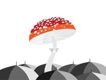Regenschirmpilz lizenzfreie abbildung