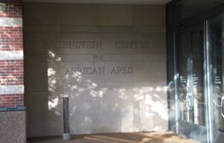 Regenstein Center for African Apes, Lincoln Park Zoo. The Regenstein Center for African Apes at the Lincoln Park Zoo is home to Several Gorillas including three stock image