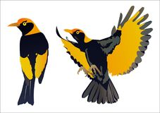 Regent Bowerbird. Yellow and black bird flying and standing royalty free illustration