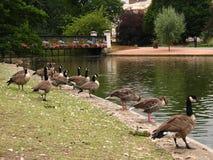 Regent Park, Londen, 2005 Royalty-vrije Stock Foto