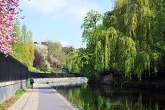 Regent's Canal in The Regent's Park, London. Canal and towpath on a sunny day, reflecting green trees and blue skies and white clouds royalty free stock photos