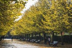 Regent's Park in de herfst, Londen, het UK stock fotografie
