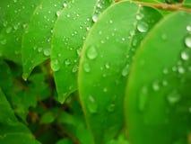 Regentröpfchen auf Blättern Stockfotografie