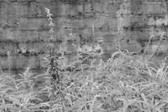 Regentropfen auf Affe-Gras Lizenzfreies Stockfoto