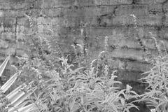 Regentropfen auf Affe-Gras Stockbilder