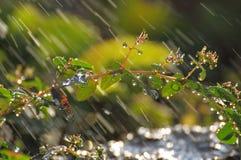 Regentropfen auf Anlage an meinem Garten Stockfotografie