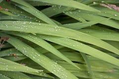Regentropfen auf Blättern Stockfotografie