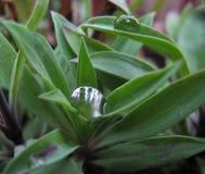Regentropfen auf Blättern lizenzfreie stockbilder