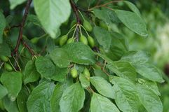 Regentropfen auf Blättern Stockbild