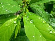 Regentropfen auf Blatt Stockfotografie