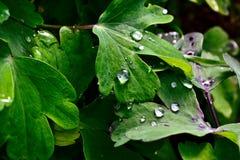 Regentropfen auf Blatt Stockbild