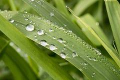 Regentropfen auf dem Gras Stockbild