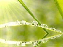 Regentropfen auf dem Gras am Sonnenaufgang lizenzfreie stockfotos