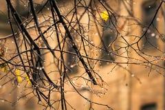 Regentropfen auf den Niederlassungen ohne Blätter im Herbst Stockbild
