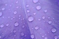 Regentropfen auf einem Blumenblatt Stockbild