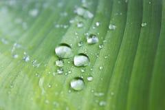 Regentropfen auf einem grünen Blatt Stockfotos