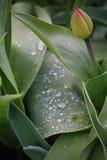 Regentropfen auf einem grünen Blatt mit schwarzem Hintergrund Lizenzfreie Stockbilder