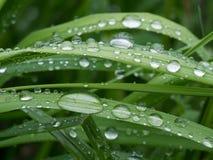Regentropfen auf einem Gras Lizenzfreies Stockfoto