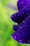 Regentropfen auf einem Irisblumenblatt Lizenzfreies Stockbild