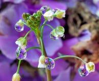Regentropfen auf einer eleganten kleinen weißen Blume Stockfotografie