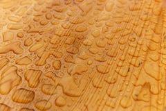 Regentropfen auf einer hölzernen Tabelle Stockbilder
