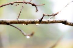 Regentropfen auf einer Niederlassung stockfoto