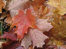 Regentropfen auf Fallblättern in Kanada lizenzfreies stockbild