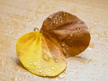 Regentropfen auf gefallenem Herbstlaub Lizenzfreie Stockfotografie